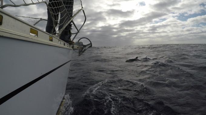 m golfinhos